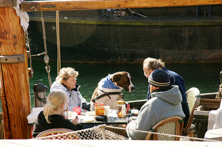 Having lunch with the family dog. Copenhagen, Denmark